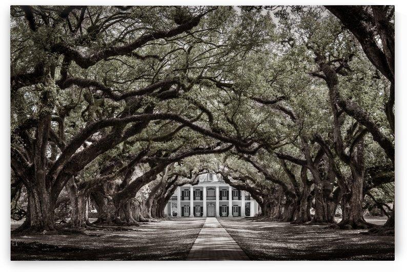 Oak Alley plantation New Orleans Louisiane noir et blanc by Francois Lariviere