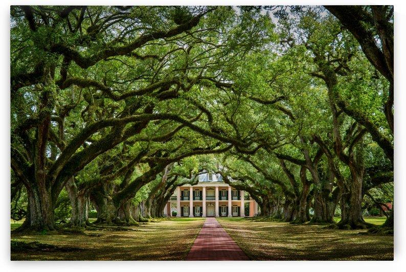 Oak Alley plantation New Orleans Louisiane by Francois Lariviere