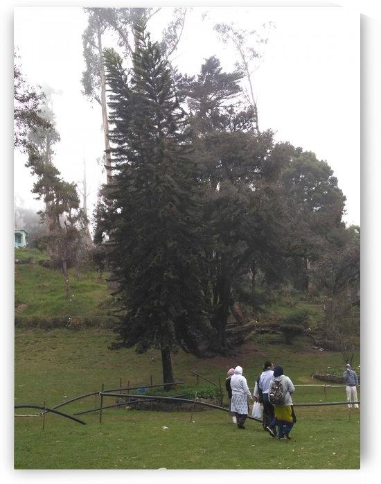 Bryant Park1 in Kodaikanal India by Sankar Srinivasan