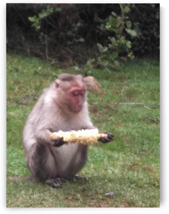 Monkey in Kodaikanal Forest India by Sankar Srinivasan