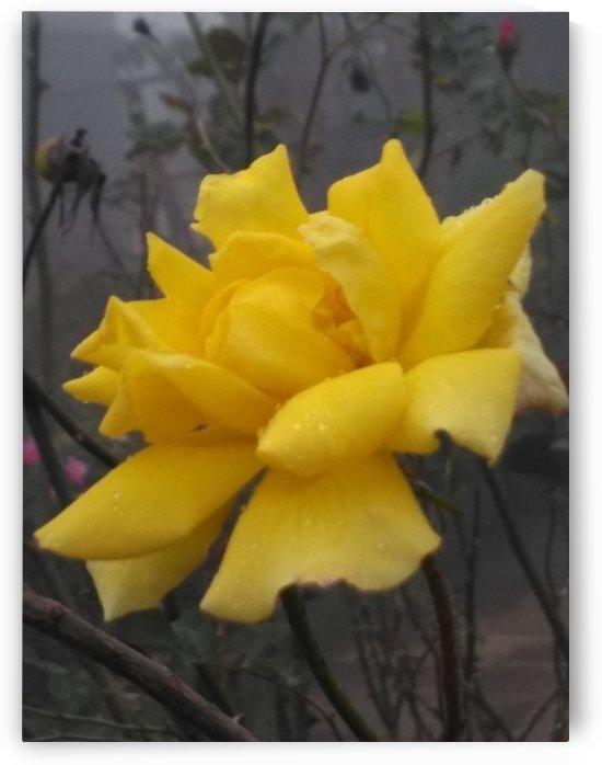 Floral Garden24 in Kodaikanal India by Sankar Srinivasan