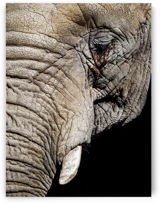 Elephant Close Up by David Yoon