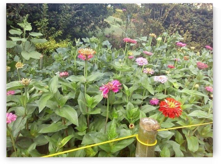 Botanical Garden in Ooty India by Sankar Srinivasan