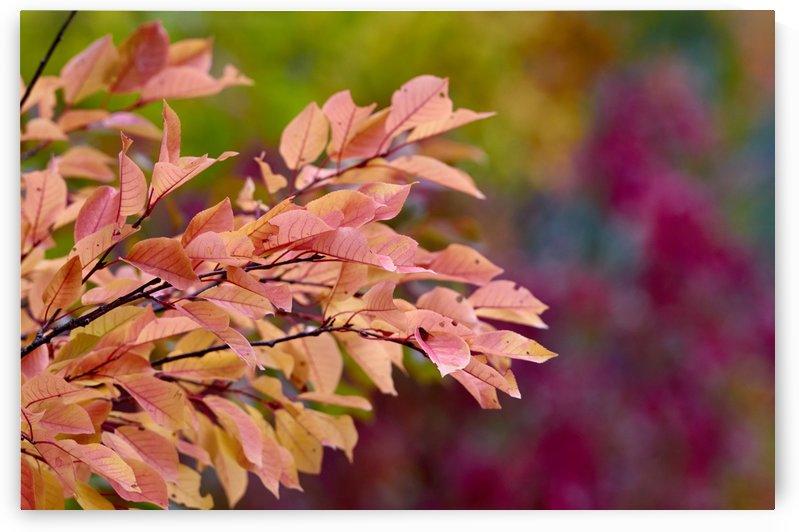 Autumn mood 2 by Vasyl