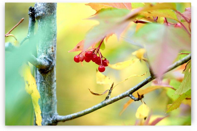 Autumn mood by Vasyl