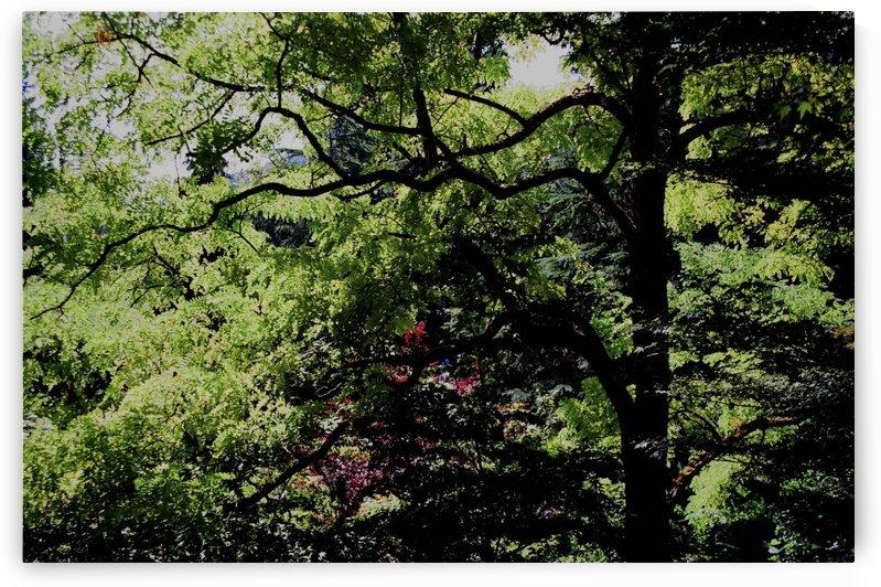 Botanical Garden Scene by  Matt Gragg
