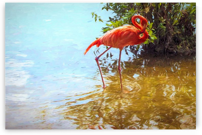 Pink Flamingo Wading In Water by Jacqueline Sleter