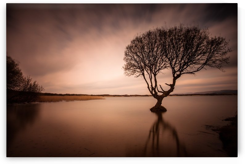 The Kenfig Tree by Leighton Collins