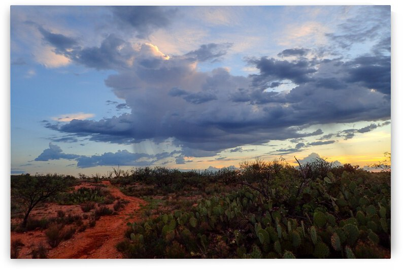 Early Morning Shower Over Arizona Desert  by  Matt Gragg