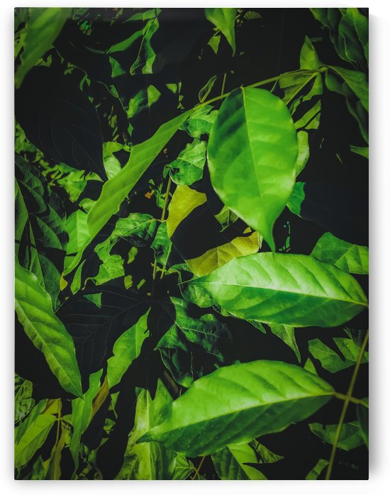 green leaves texture background by TimmyLA
