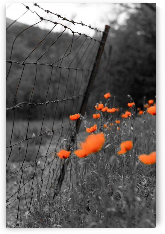Roadside Wildflowers by Michael Pierce