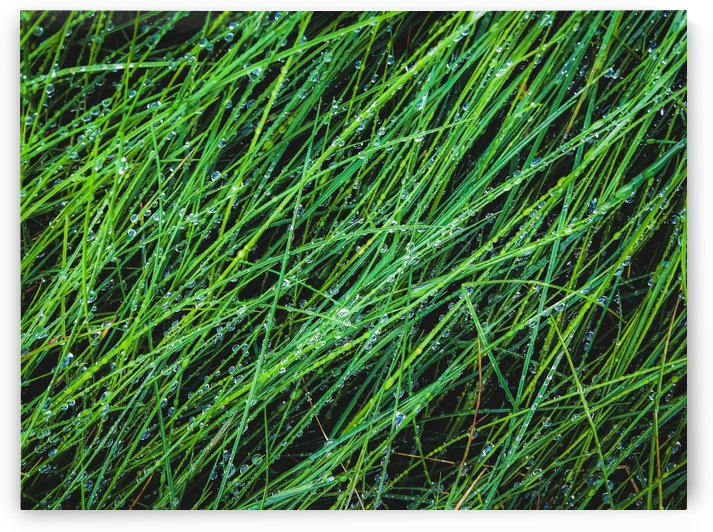 closeup green grass field texture with water drop by TimmyLA