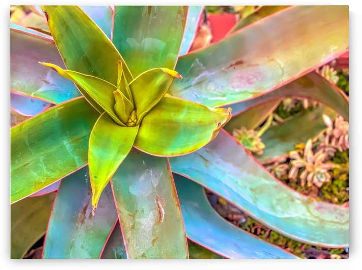 closeup green succulent leaves texture background by TimmyLA
