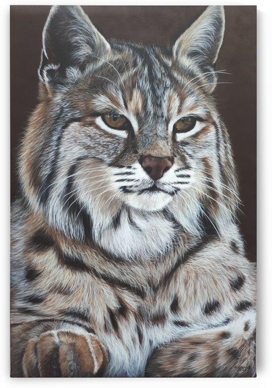 Lynx Maurice by Suzanne Grenier