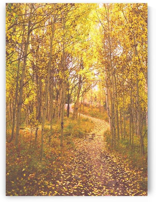 Aspen Gold on a Colorado Trail by Steve Tohari