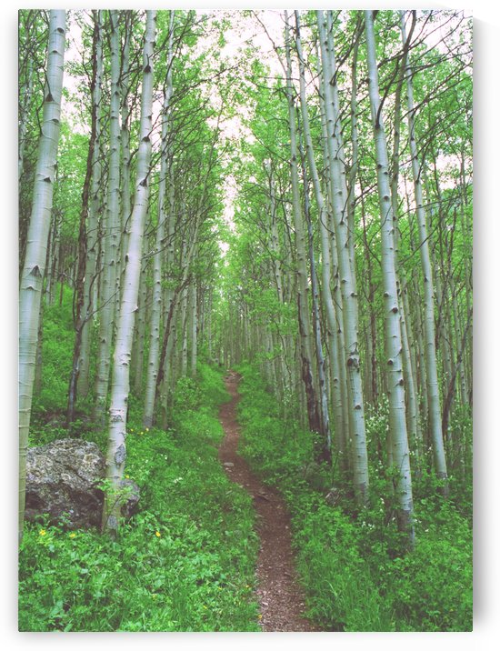 Aspen Trail above Vail by Steve Tohari