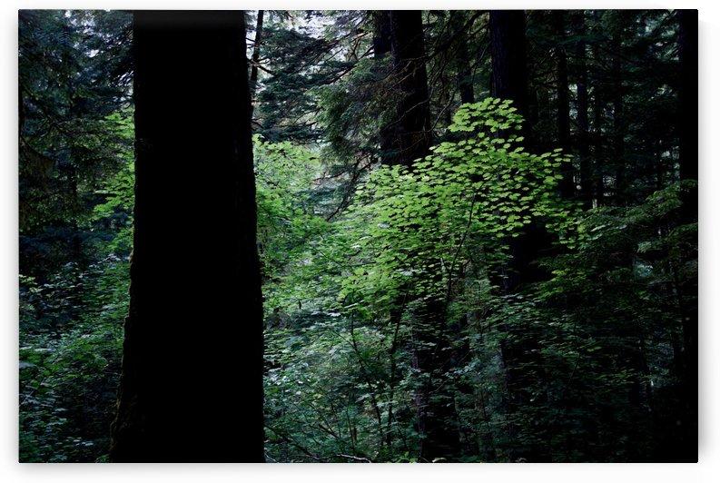 Springtime Forest by  Matt Gragg