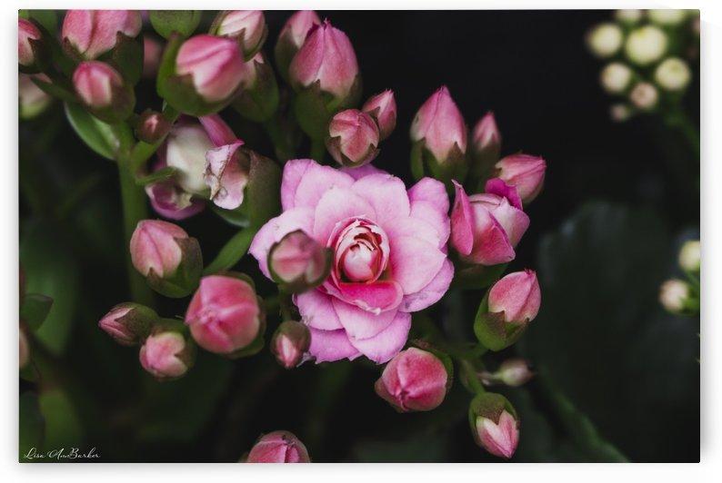 Pink Flower Cluster by Lisa Ann Barker