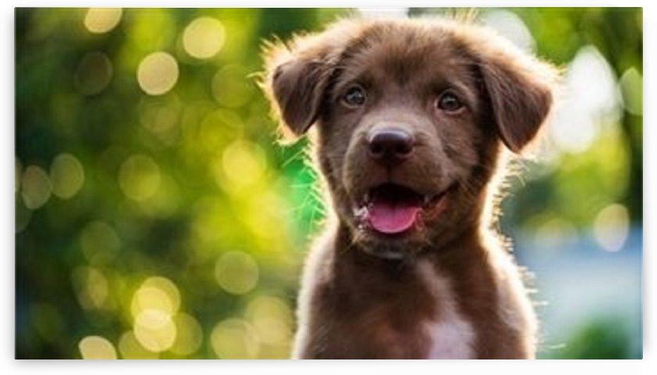 esa dog by ESA Letter