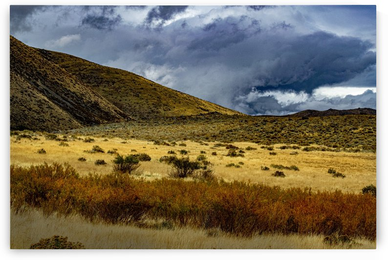 Desert Storm by Frank Wilson