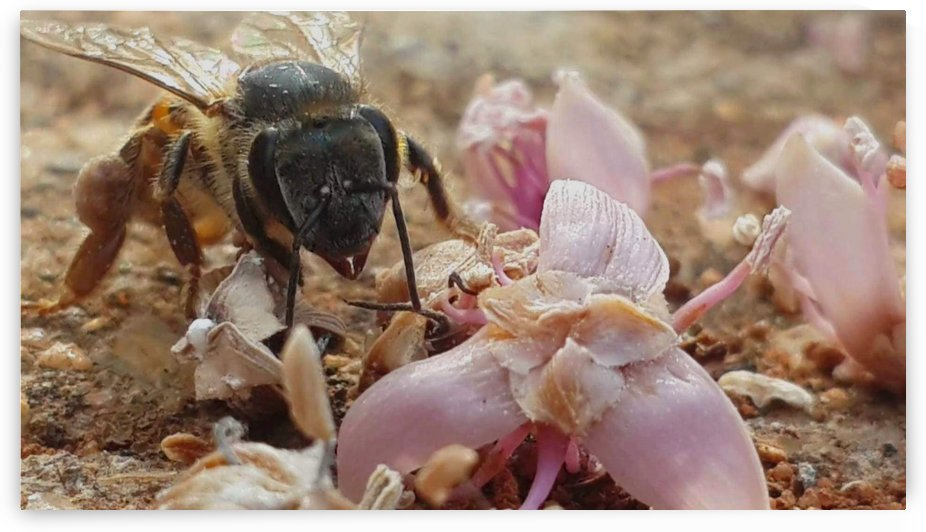 Bee in your face by Lezandie de Beer