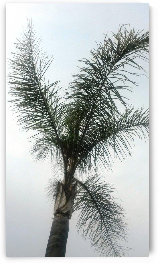 Palm in the sky by Lezandie de Beer