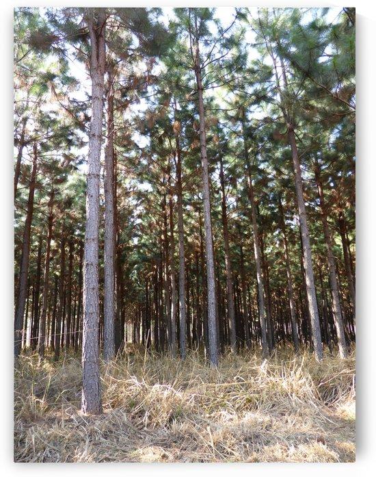 Woodlands by Lezandie de Beer