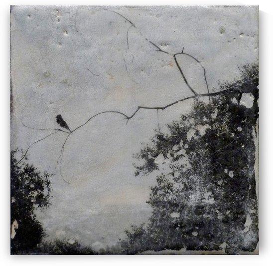 A birds vista by Nicole Fournier