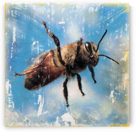 Budda-bee by Nicole Fournier