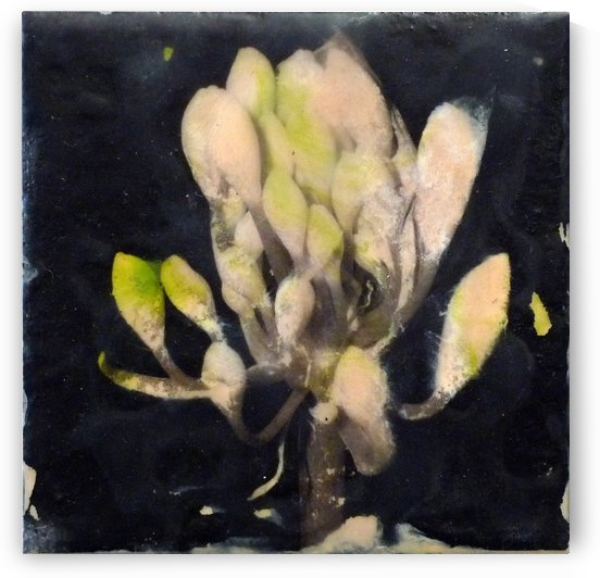Budding bloom nighttime by Nicole Fournier