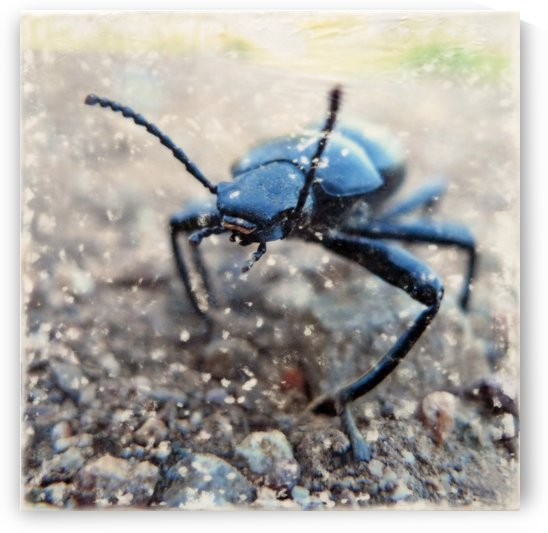Stink bug march by Nicole Fournier