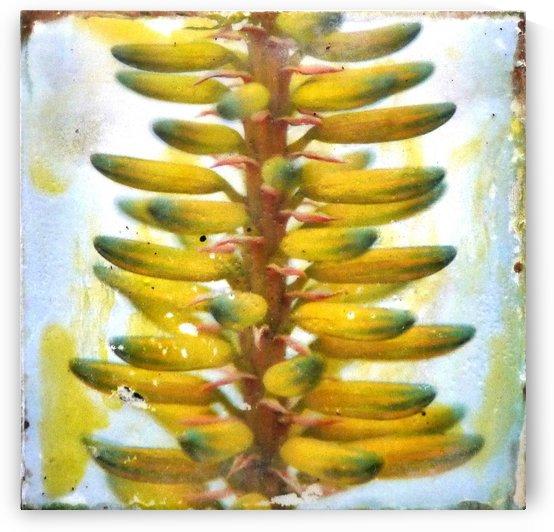 Succulent ladder by Nicole Fournier