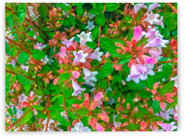 closeup blooming pink flowers with green leaves by TimmyLA