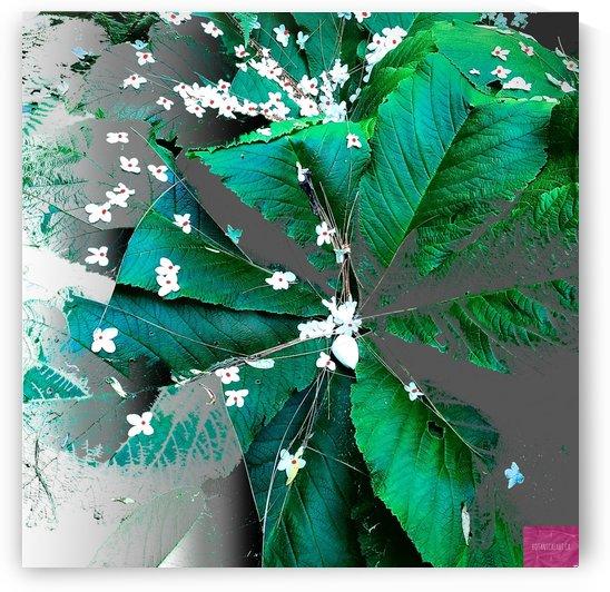 White Flower Drizzle by BotanicalArt ca