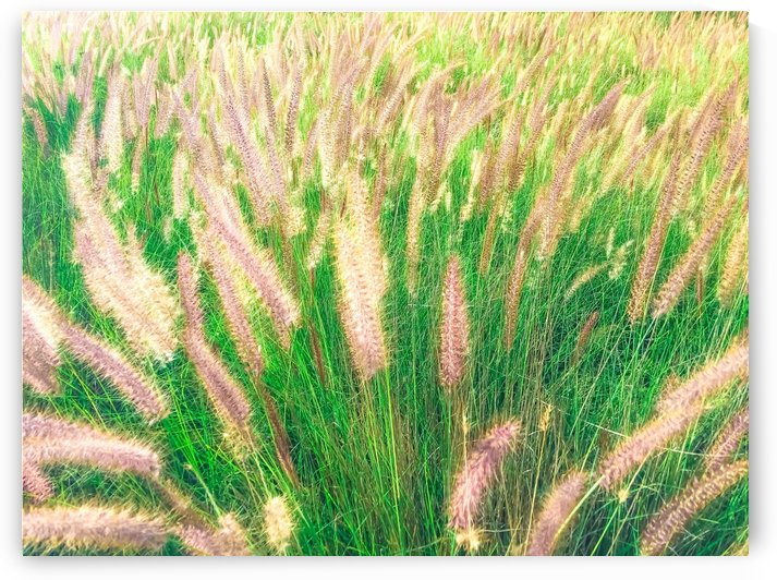 closeup green grass field texture abstract with grass flowers by TimmyLA