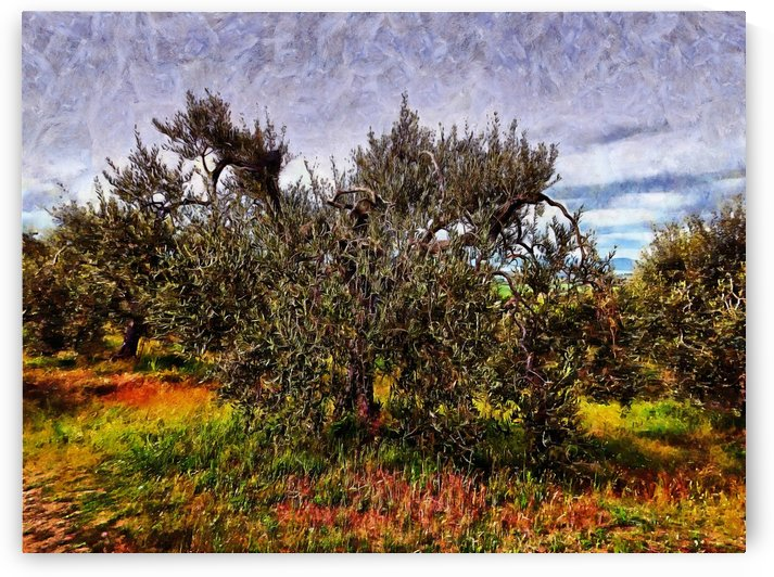 Shapely Olive Tree by Dorothy Berry-Lound