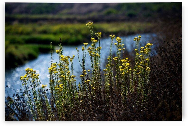 Flowers in Wetlands by  Matt Gragg