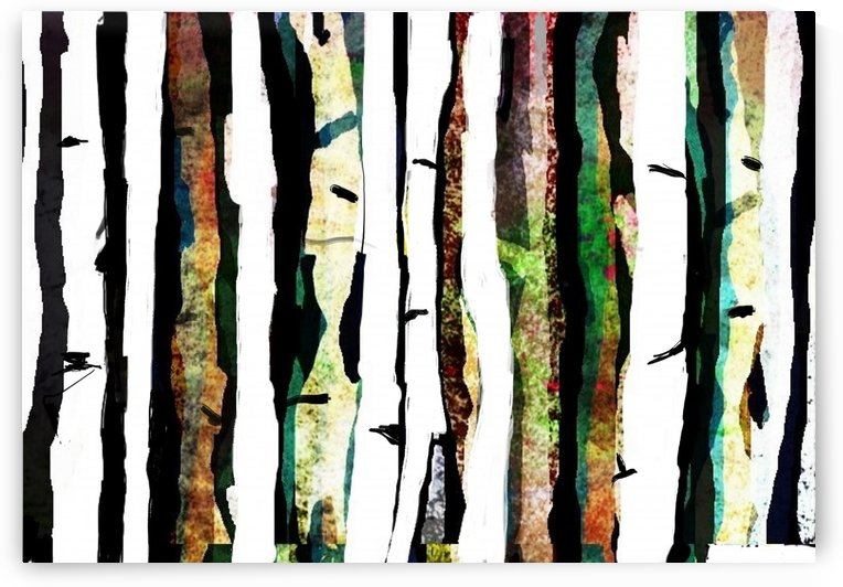 Birch Grove by David Abrams Art
