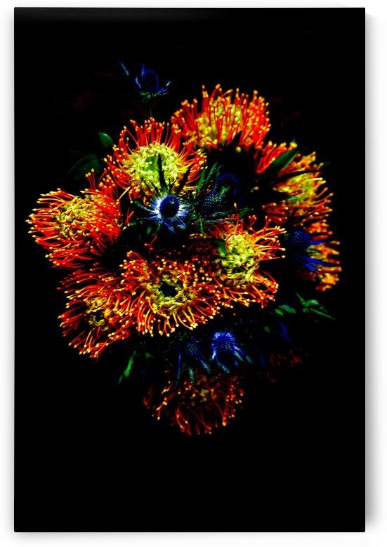 Floral burst  by D-Lawrence