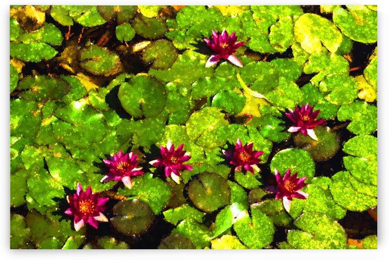 Pretty in Fuchsia - Waterlily Pad Impression by GeorgiaM