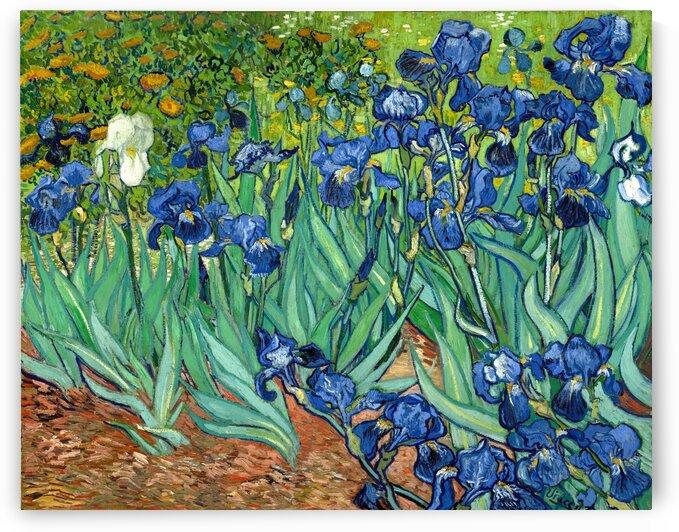 Irises by Van Gogh by Van Gogh