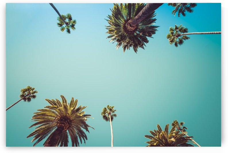 Palm Trees by vintagesupreme