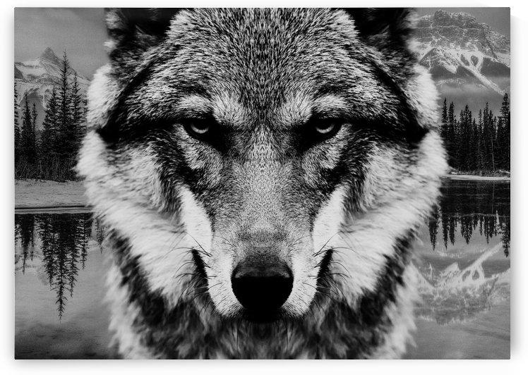 Wolf & Forest 7 by Mateusz Slemp