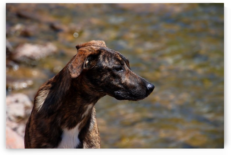 Sophie - Mountain Cur by TJ Meagher