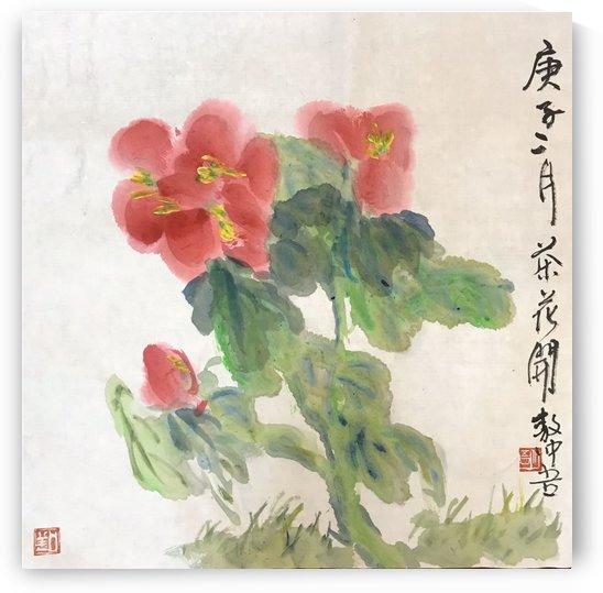 SH 36 Camellia    by Zhongwu