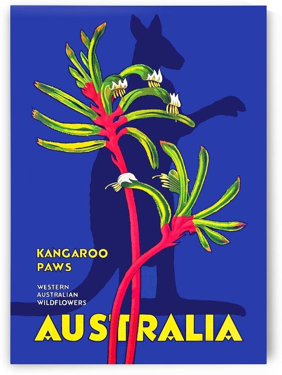 Kangaroo Paws Australia by vintagesupreme