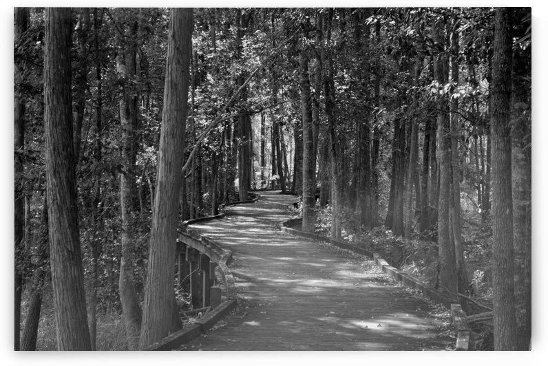Enjoying The Boardwalk by Maria Dale