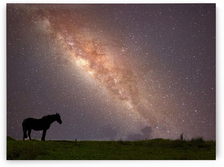 Horse Galaxy by Andy Jamieson