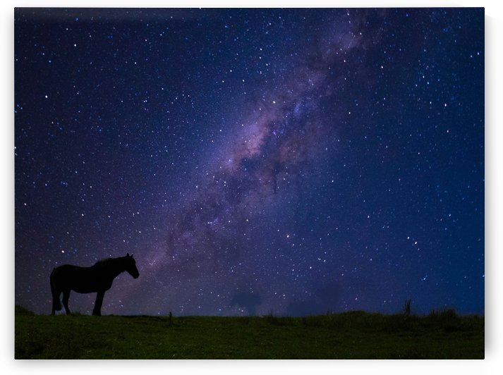 Lone horse star by Andy Jamieson