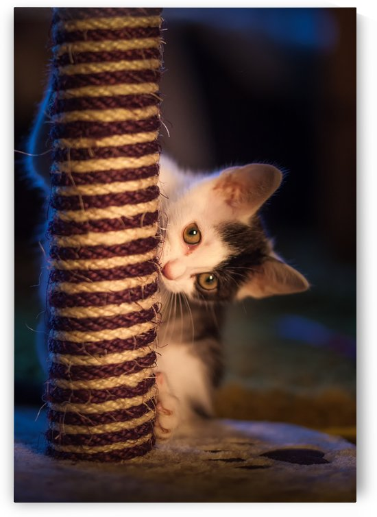 Kitten at play with scratch post by Leighton Collins